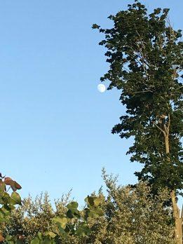 The Moonrise